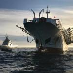 Captura récord de calamar Illex Argentinus en Malvinas