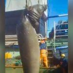 Pesqueros chinos depredan el Mar Argentino matando delfines, lobos y elefantes marinos